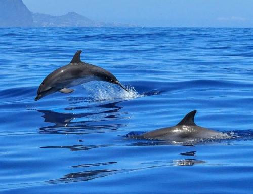 Les meilleurs endroits pour nager avec les dauphins en France !