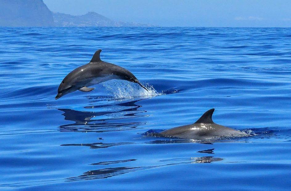 nager avec des dauphins en france
