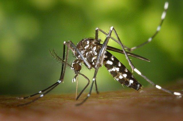 comment éloigner les moustiques en camping